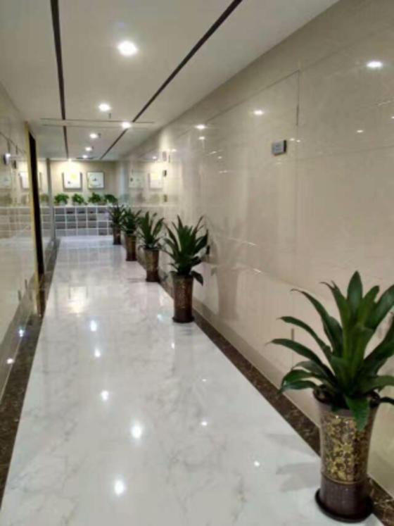 室内绿化植物