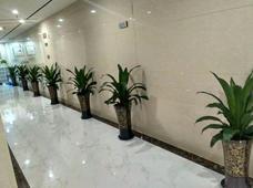 苏州绿化养护
