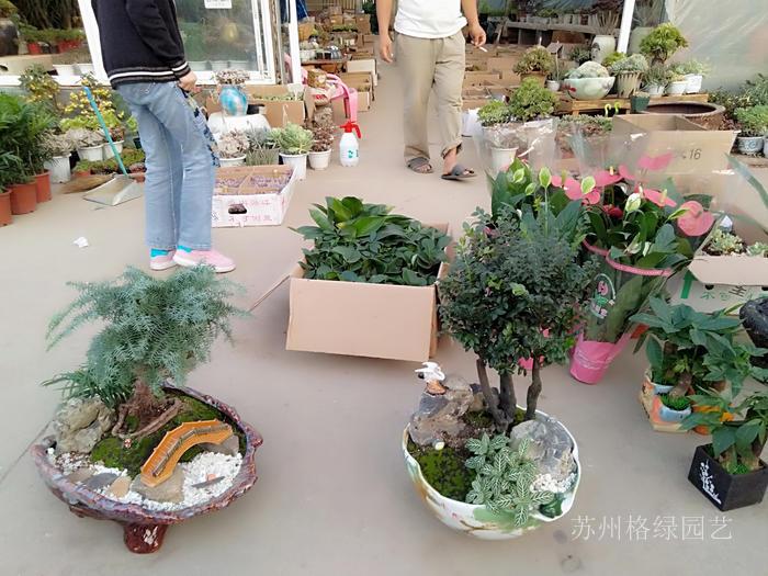 花卉市场批发