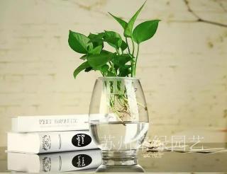 苏州绿植租赁,苏州绿植盆栽 ,苏州州绿植花卉,苏州园林绿化,苏州园林设计,苏州园艺景观,苏州园林绿化养护,苏州植物出售