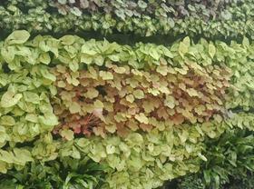 苏州州绿植花卉,苏州绿植租赁,苏州绿植盆栽,苏州园林绿化,苏州园林设计,苏州园艺景观,苏州园林绿化养护,苏州植物出售