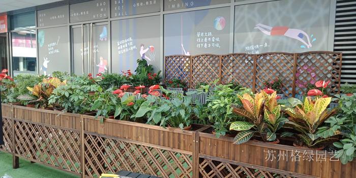 庭院木槽子绿植