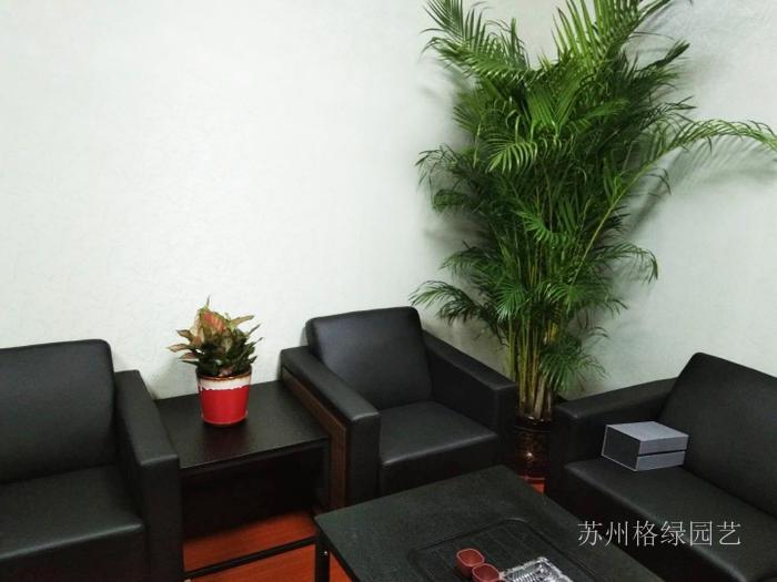刚装修好办公室内绿化分享