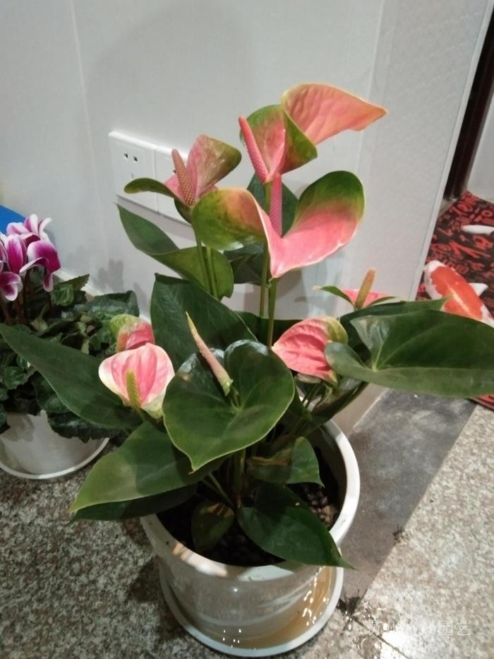 家里植物盆栽