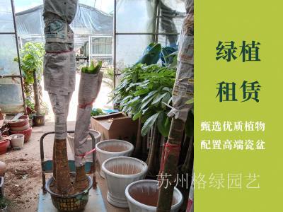 蘇州綠植盆栽綠植租賃綠植花卉租擺