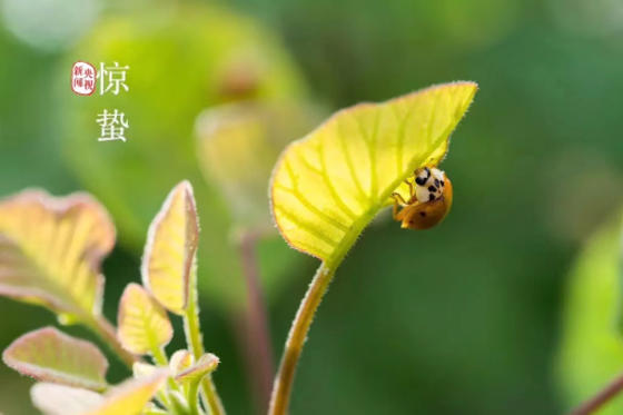 苏州室内绿化植物养护