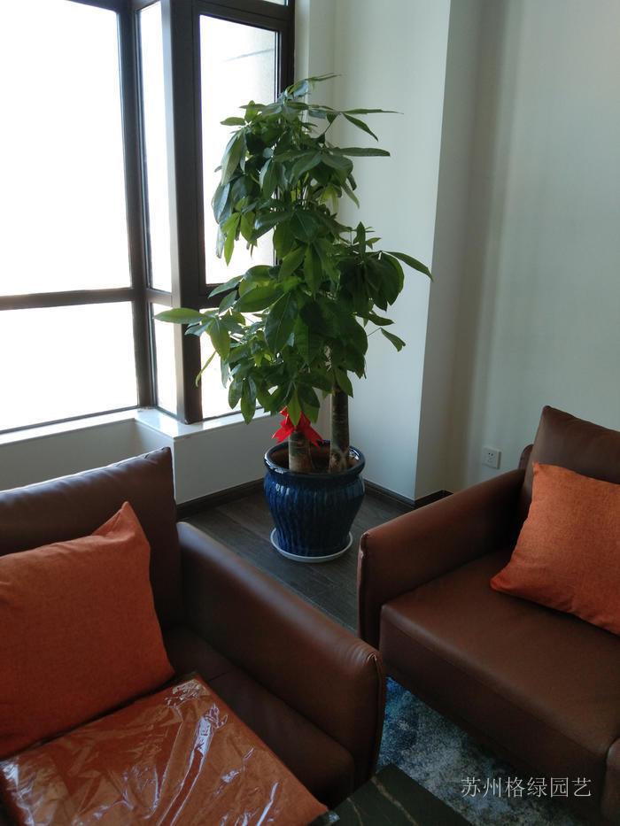 辦公室室內綠植