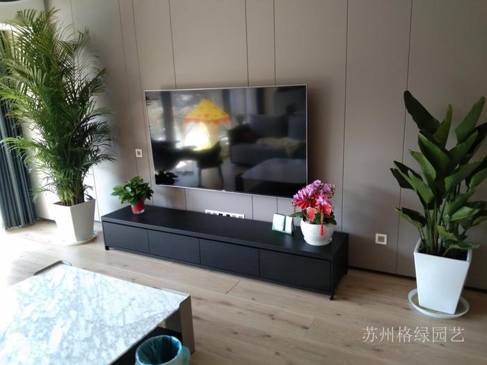 家里電視機前臺擺放綠植