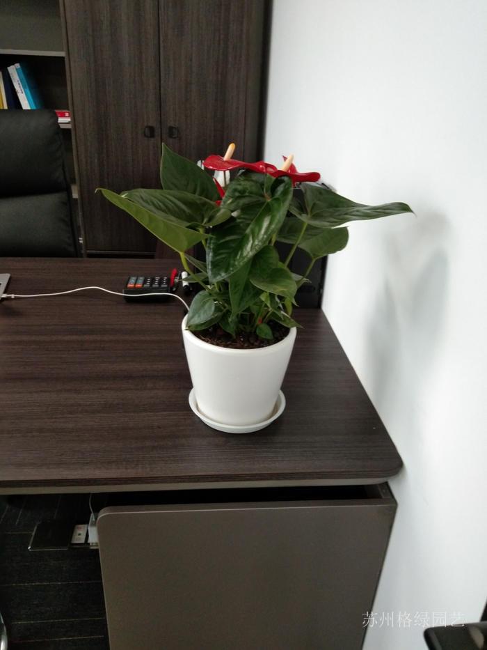 不到100平的辦公室綠植花卉