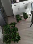 蘇州綠植租賃