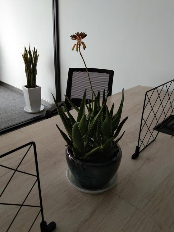 蘇州室內綠化植物養護